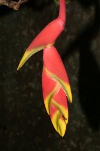 Fleur Guyane Aventure