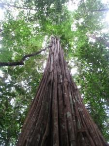 bois cathédrale Guyane aventure expédition
