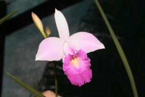 Orchidée guyane aventure nature pêche