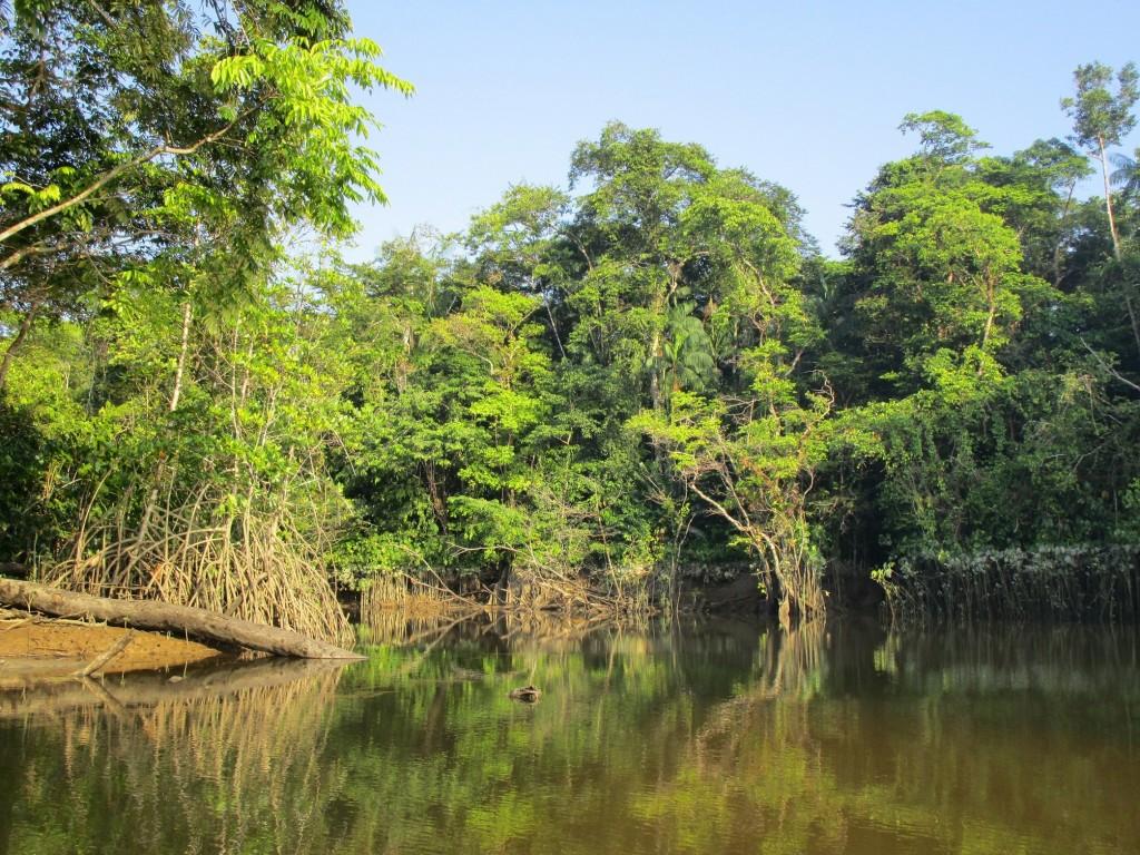 forêt guyane aventure approuague