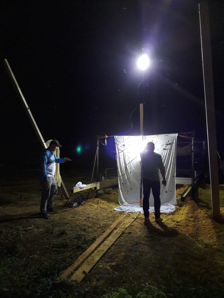 Piège lumineux insectes Guyane